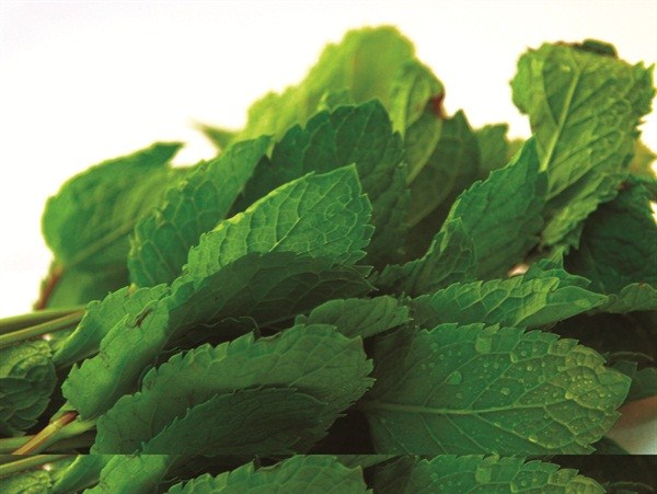 M-na1210ingredient-peppermint-4-1 (Copy)