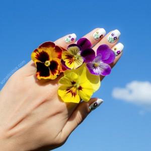 Hướng Dẫn Vẽ Nail: Hoa Pansy Xứ Siberian